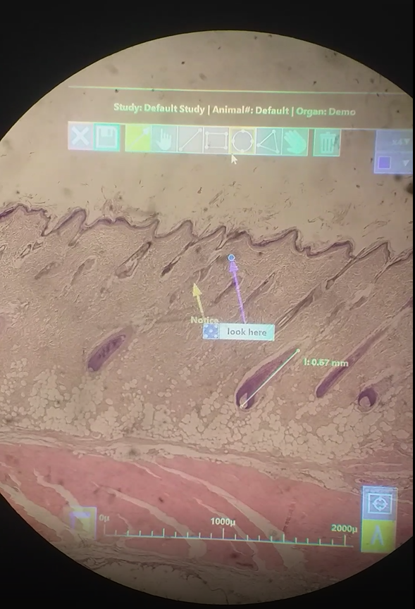 augmented reality microscope annotations
