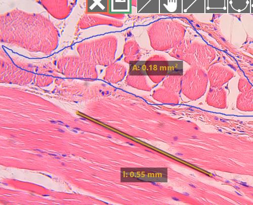 digital pathology telepathology software applications