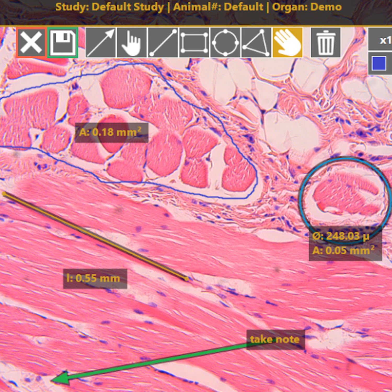 Image capture, morphometrics and annotations